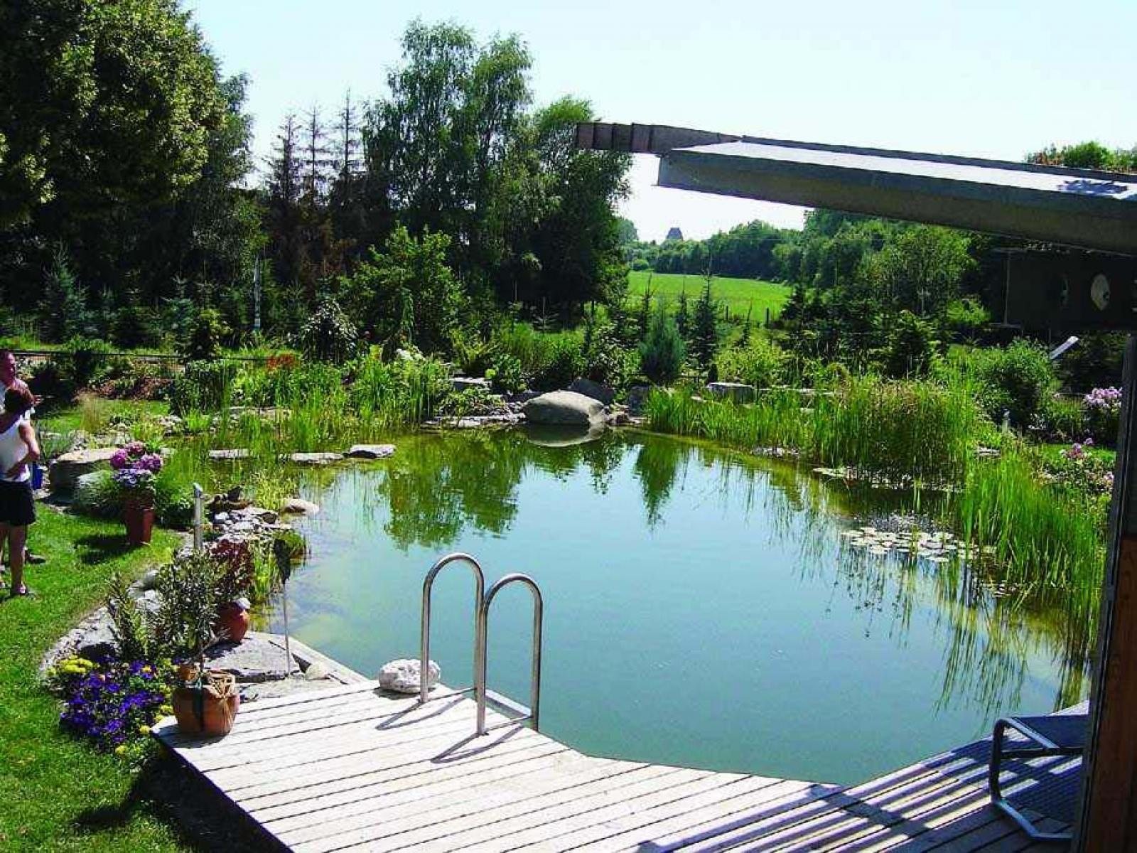 , Cleaning and maintaining the swimming pond – this is how it's done, Best Garden, Home And DIY Tips