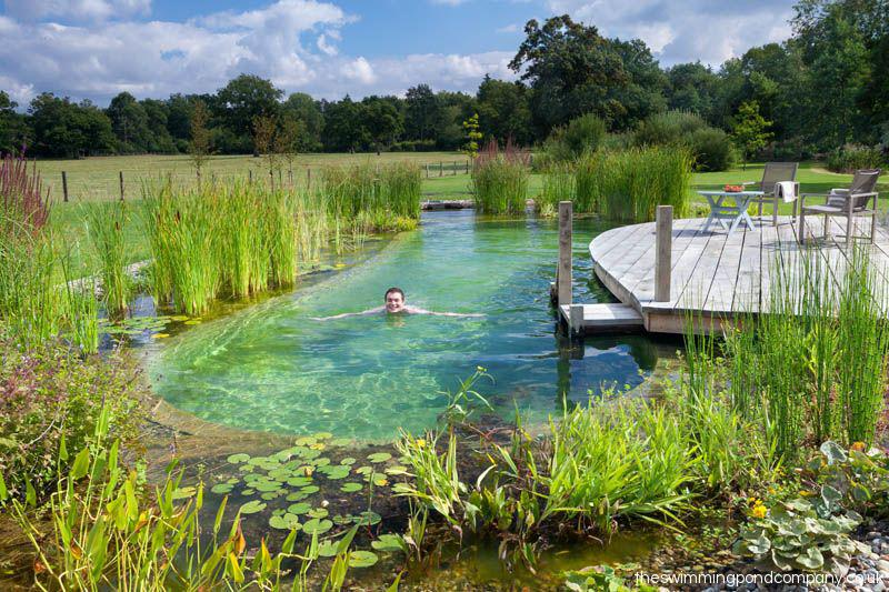 , Planning a swimming pond – important information on approval, fish & care, Best Garden, Home And DIY Tips