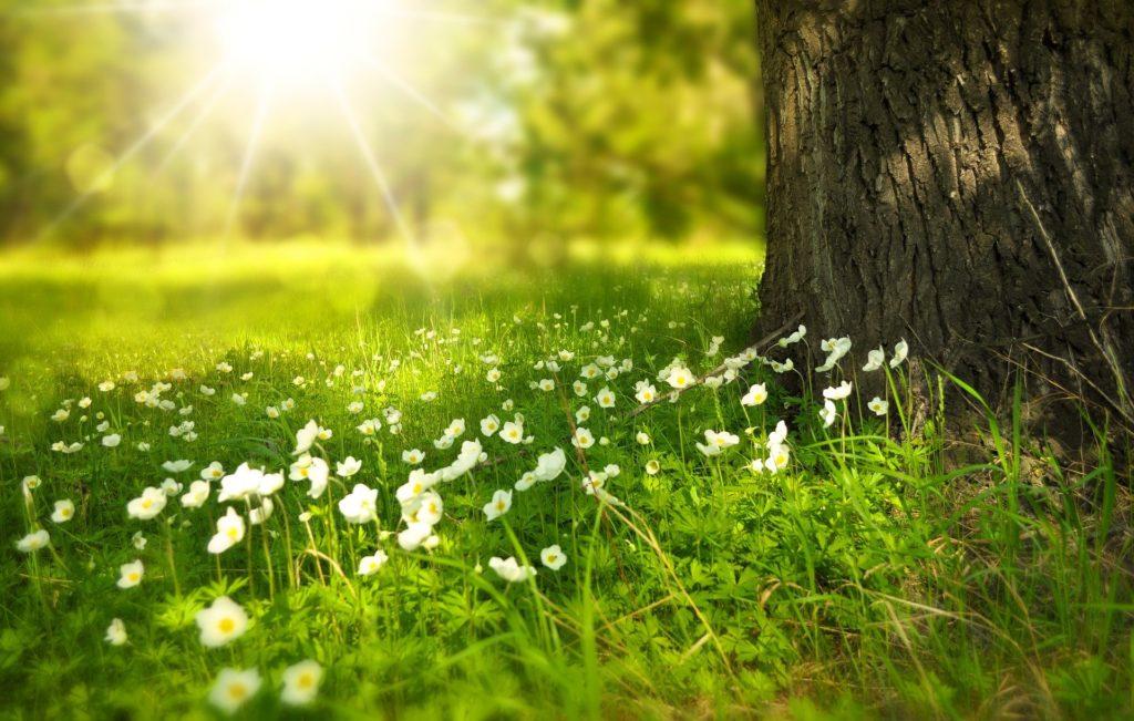 Tree 276014 1920 1024x651, Best Garden, Home And DIY Tips