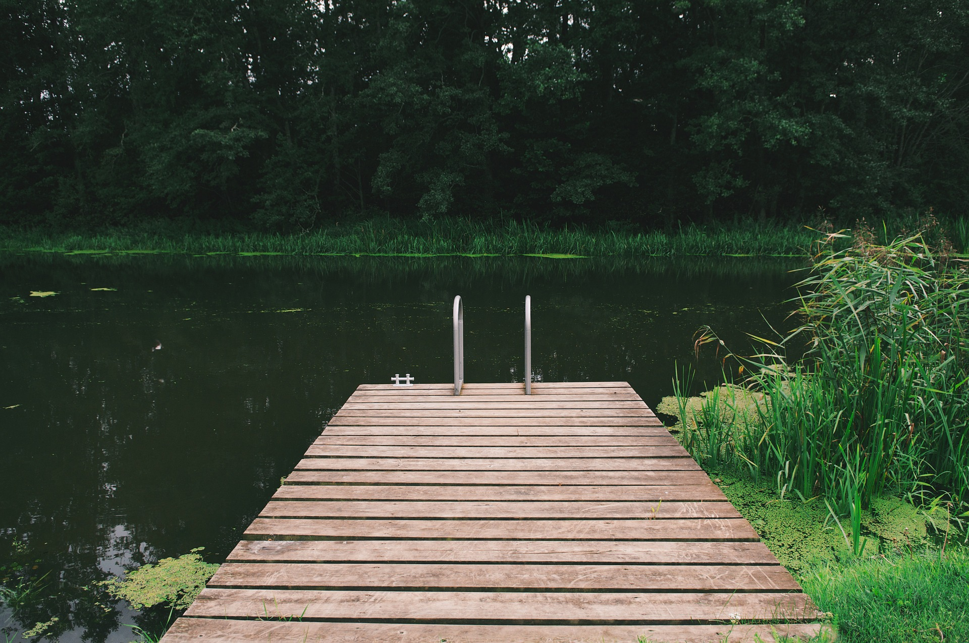 , Swimming pond or swimming pool? – An overview of the advantages and disadvantages of both swimming pools, Best Garden, Home And DIY Tips
