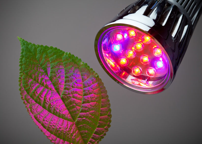 Best LED Grow Lights, Best Garden, Home And DIY Tips