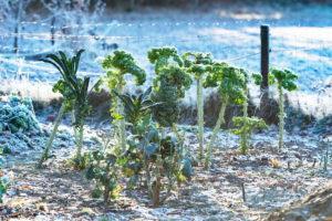, Gardening in winter: these options exist, Best Garden, Home And DIY Tips