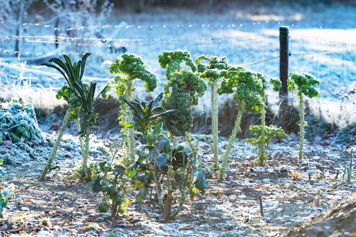 Gardening in winter: these options exist