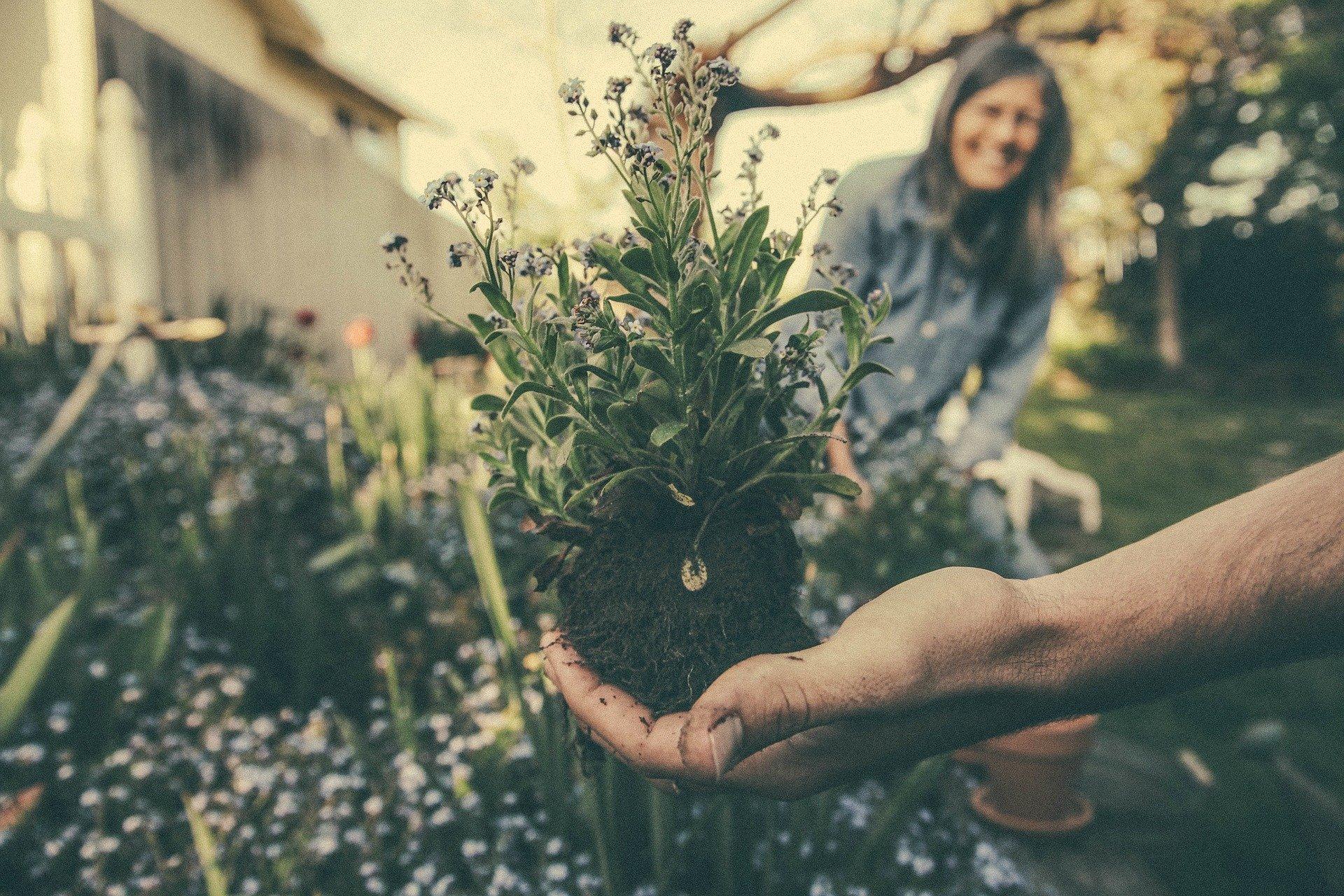 The ideal garden for seniors