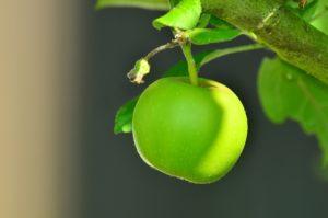, Nine life hacks for savvy gardeners, Best Garden, Home And DIY Tips