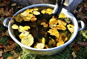 , Collecting And Using Rainwater: Tips & Tricks, Best Garden, Home And DIY Tips