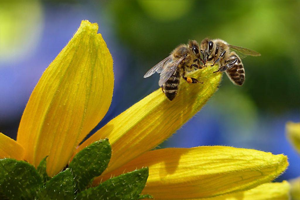 Bee 1575236 1920 1024x683, Best Garden, Home And DIY Tips