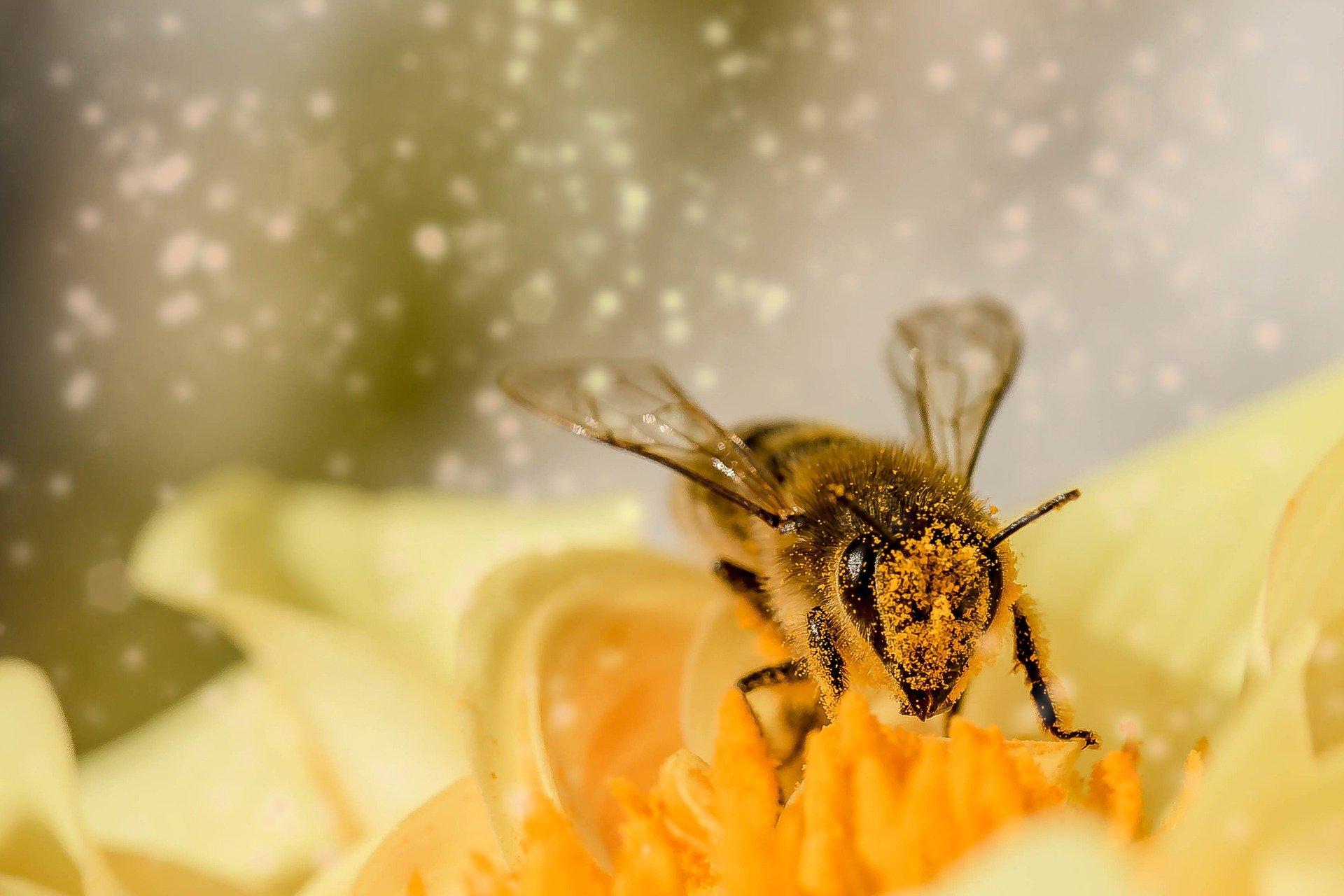 , How do I make my garden bee-friendly?, Best Garden, Home And DIY Tips