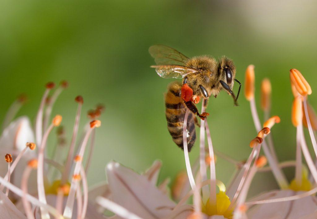 Bee 515023 1920 1024x707, Best Garden, Home And DIY Tips