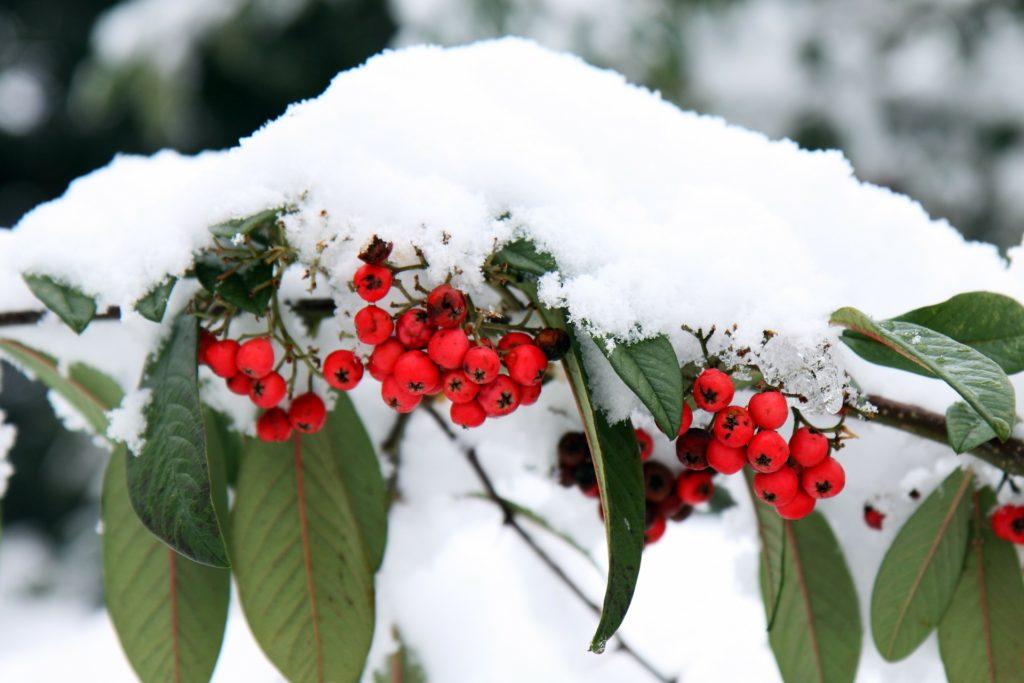 Berries 15717 1920 1024x683, Best Garden, Home And DIY Tips