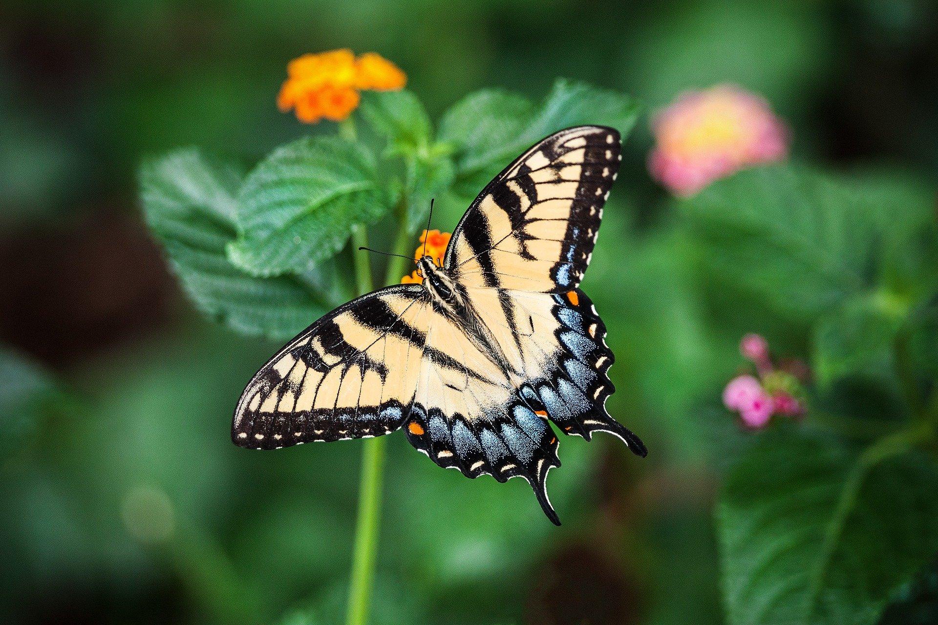 , A garden for butterflies, Best Garden, Home And DIY Tips