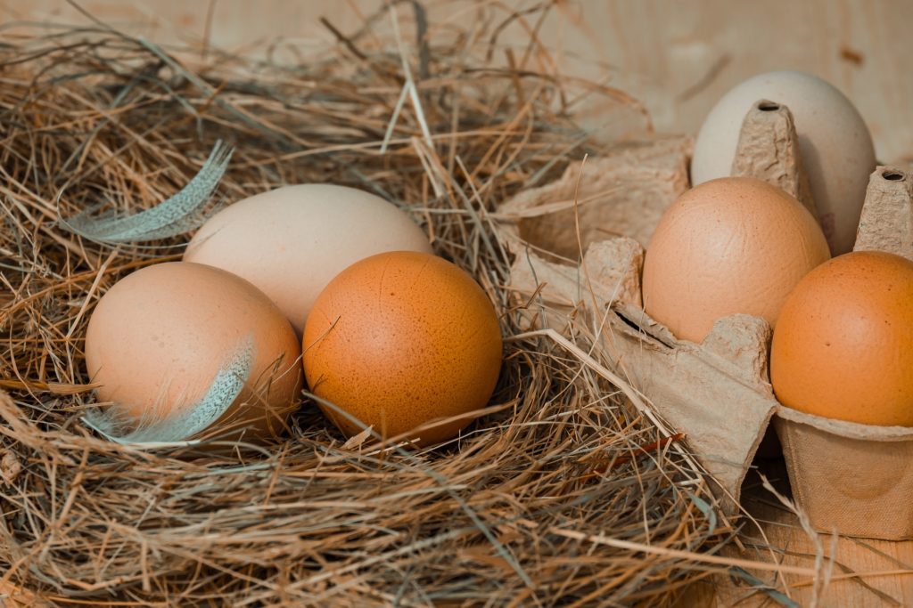 Chicken Eggs 4212132 1920 1024x683, Best Garden, Home And DIY Tips