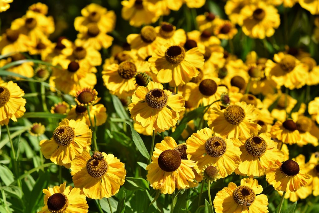 Coneflower 3517443 1920 1024x683, Best Garden, Home And DIY Tips