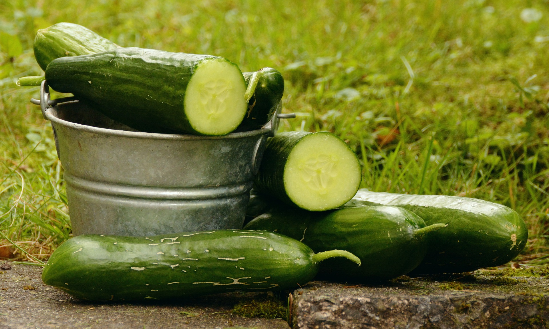 cucumbers, Cucumbers in your own backyard – pre-breeding and cultivation, Best Garden, Home And DIY Tips