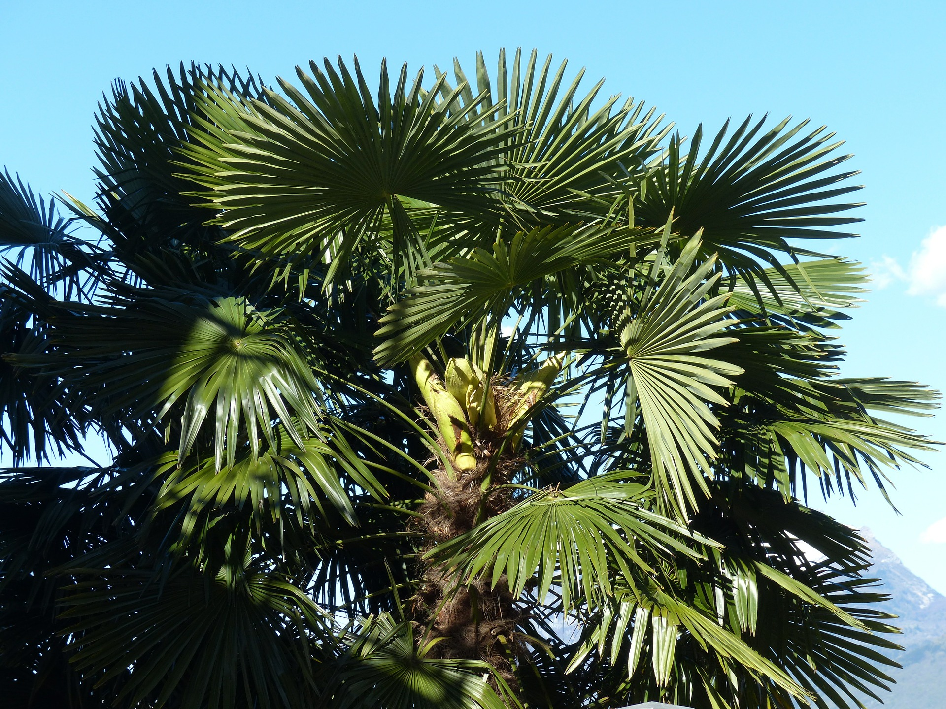 , Grow date palm from the core, Best Garden, Home And DIY Tips