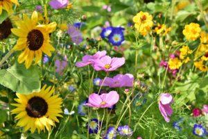 , Flower meadow to go, Best Garden, Home And DIY Tips