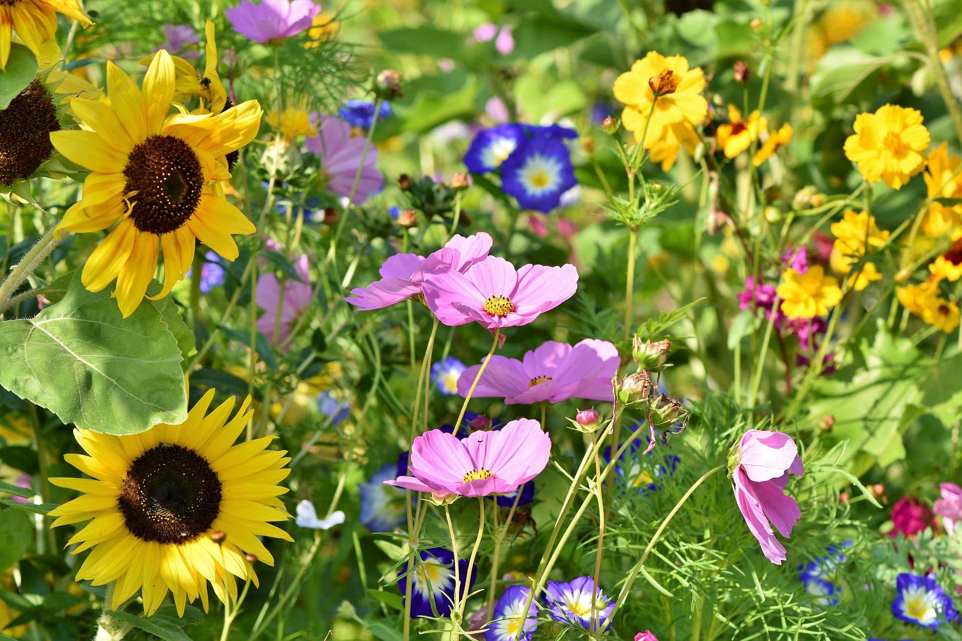 , Flower meadow to go, Best Garden, Home And DIY Tips