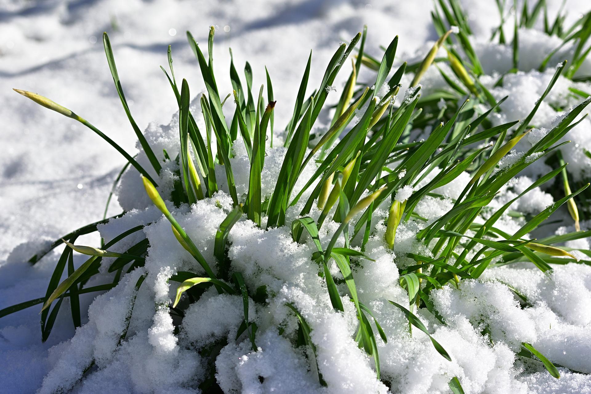 , Gardening In Winter, Best Garden, Home And DIY Tips