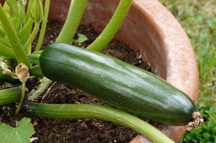 Garden Hack 4, Best Garden, Home And DIY Tips