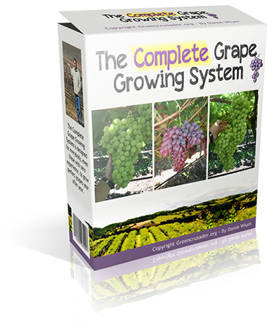 Grape Growing System, Best Garden, Home And DIY Tips