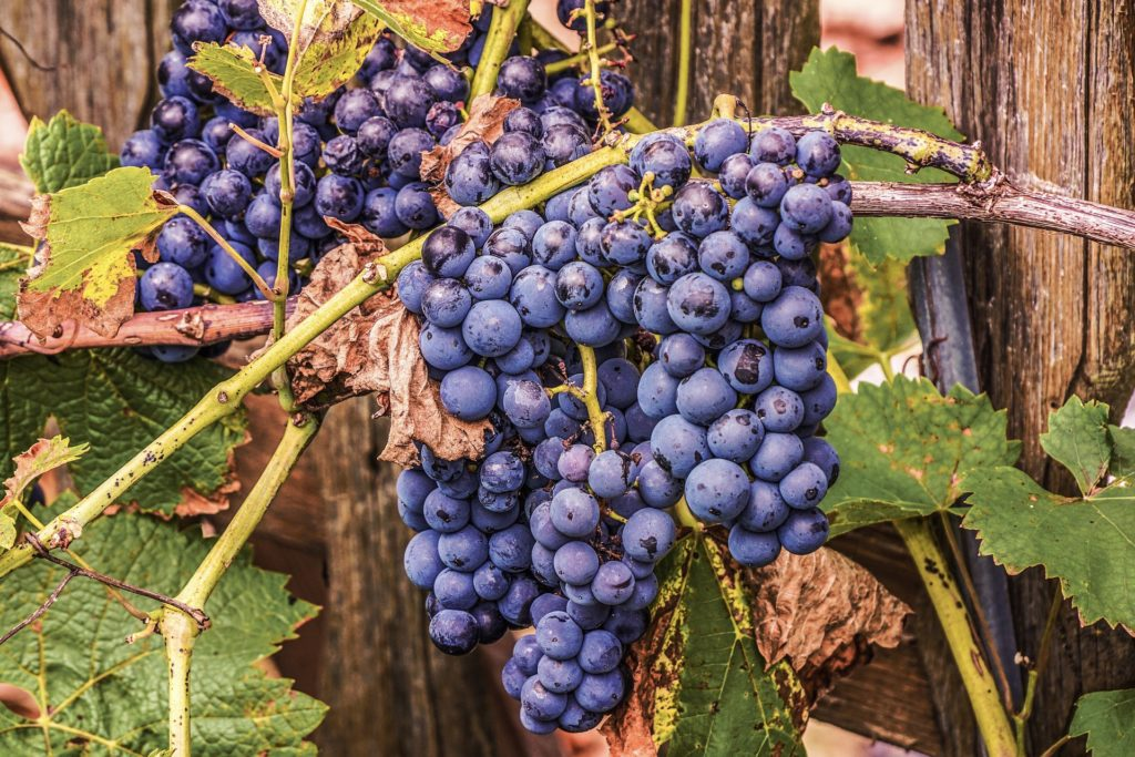 Grapes 4448081 1920 1024x683, Best Garden, Home And DIY Tips