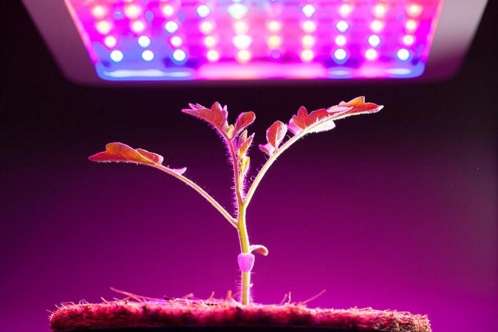 Grow Light 12 1024x683, Best Garden, Home And DIY Tips