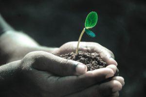 soil analysis, Soil Analysis: Analyze And Improve Garden Soil, Best Garden, Home And DIY Tips