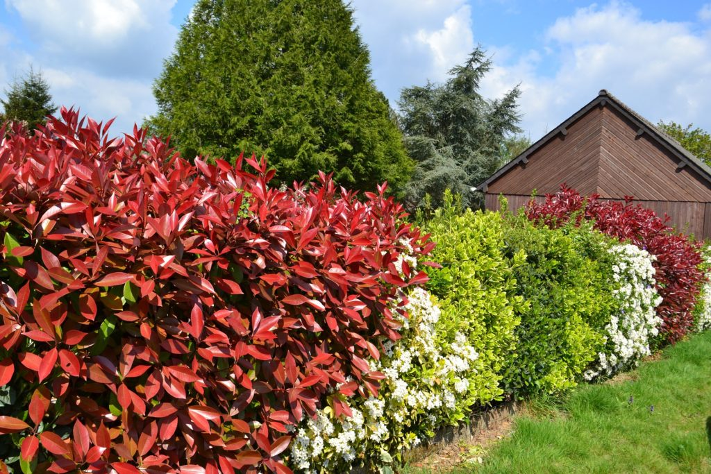 Hedge 891354 1920 1024x683, Best Garden, Home And DIY Tips