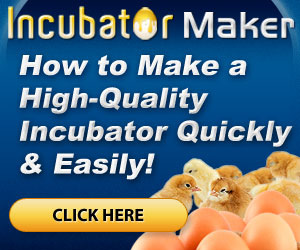 Incubator, Best Garden, Home And DIY Tips