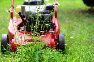 , Can Lawn Mowers Get Wet, Best Garden, Home And DIY Tips
