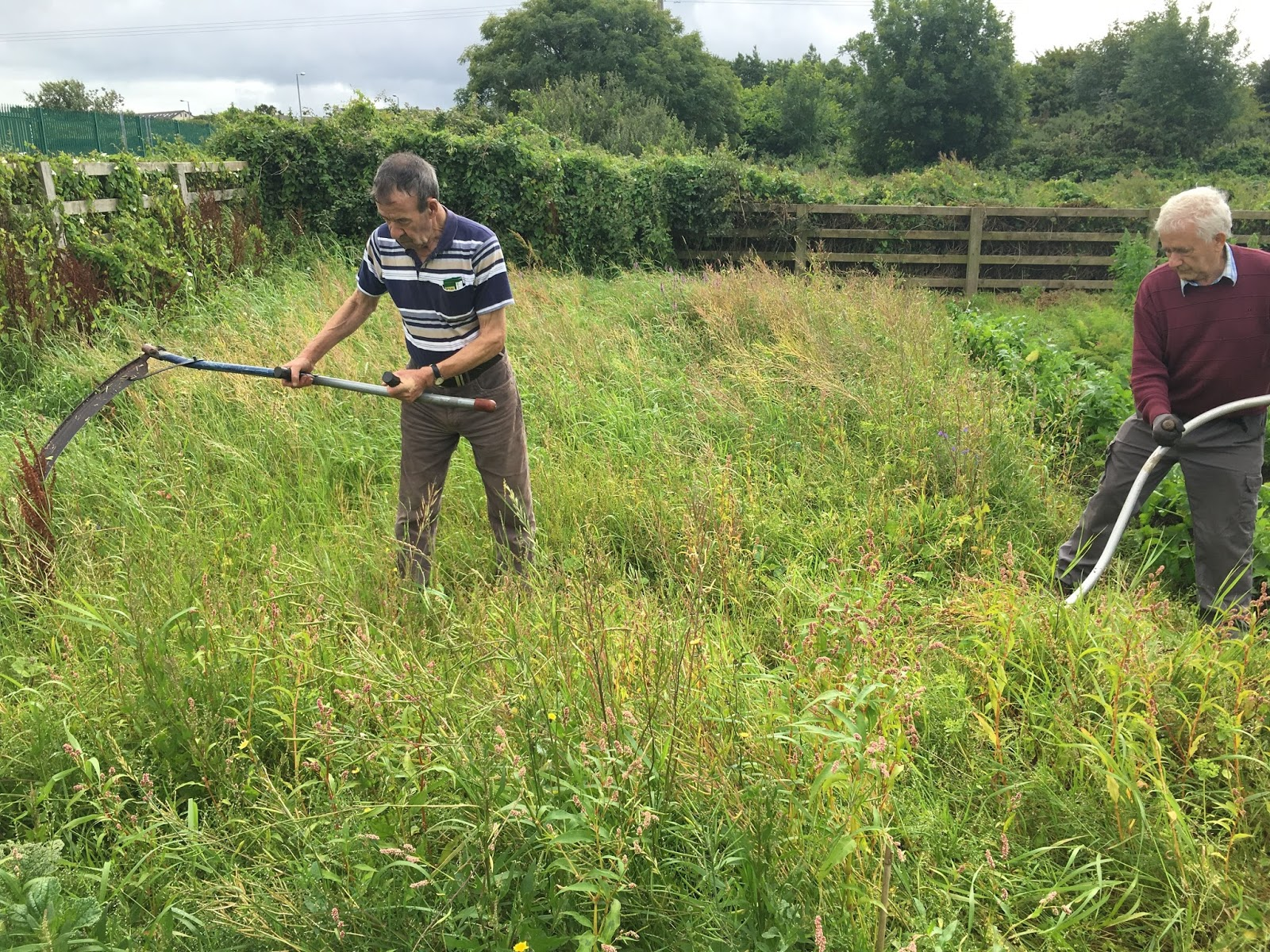 , Mow the lawn ecologically, Best Garden, Home And DIY Tips