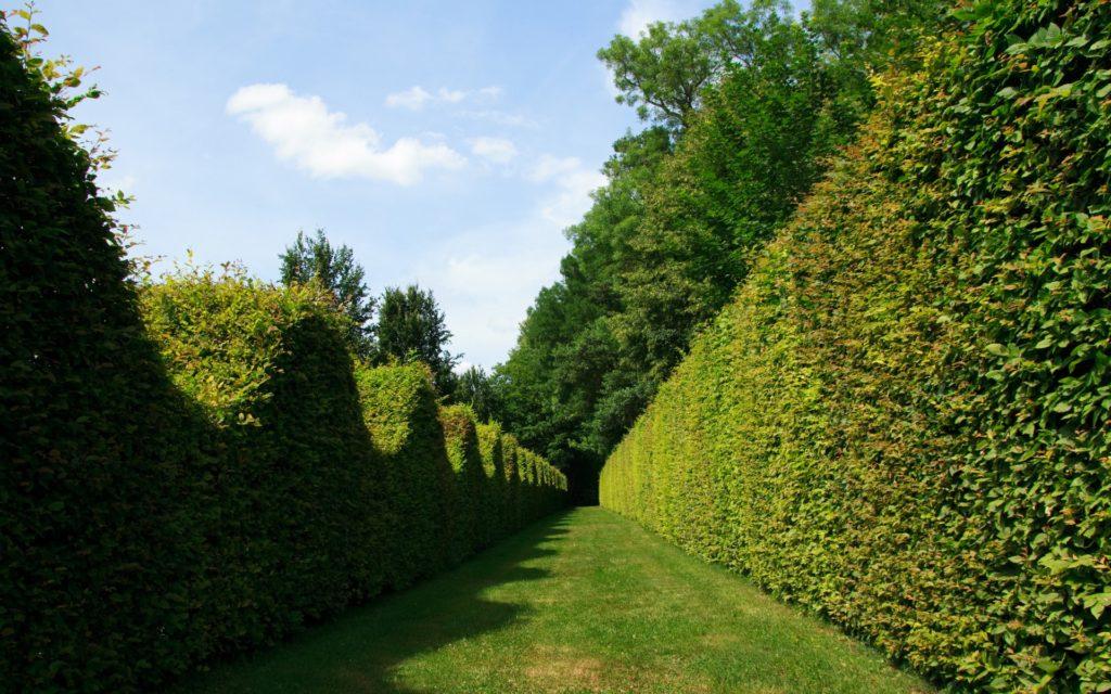 Maze 2 1024x640, Best Garden, Home And DIY Tips