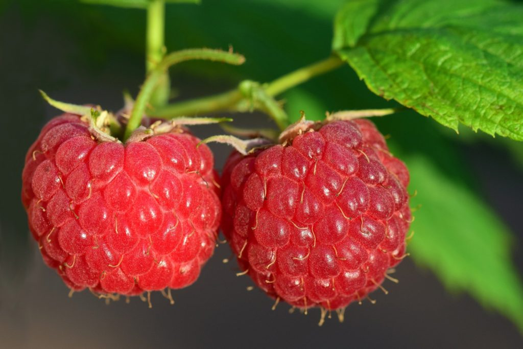 Raspberry 3454504 1920 1024x683, Best Garden, Home And DIY Tips