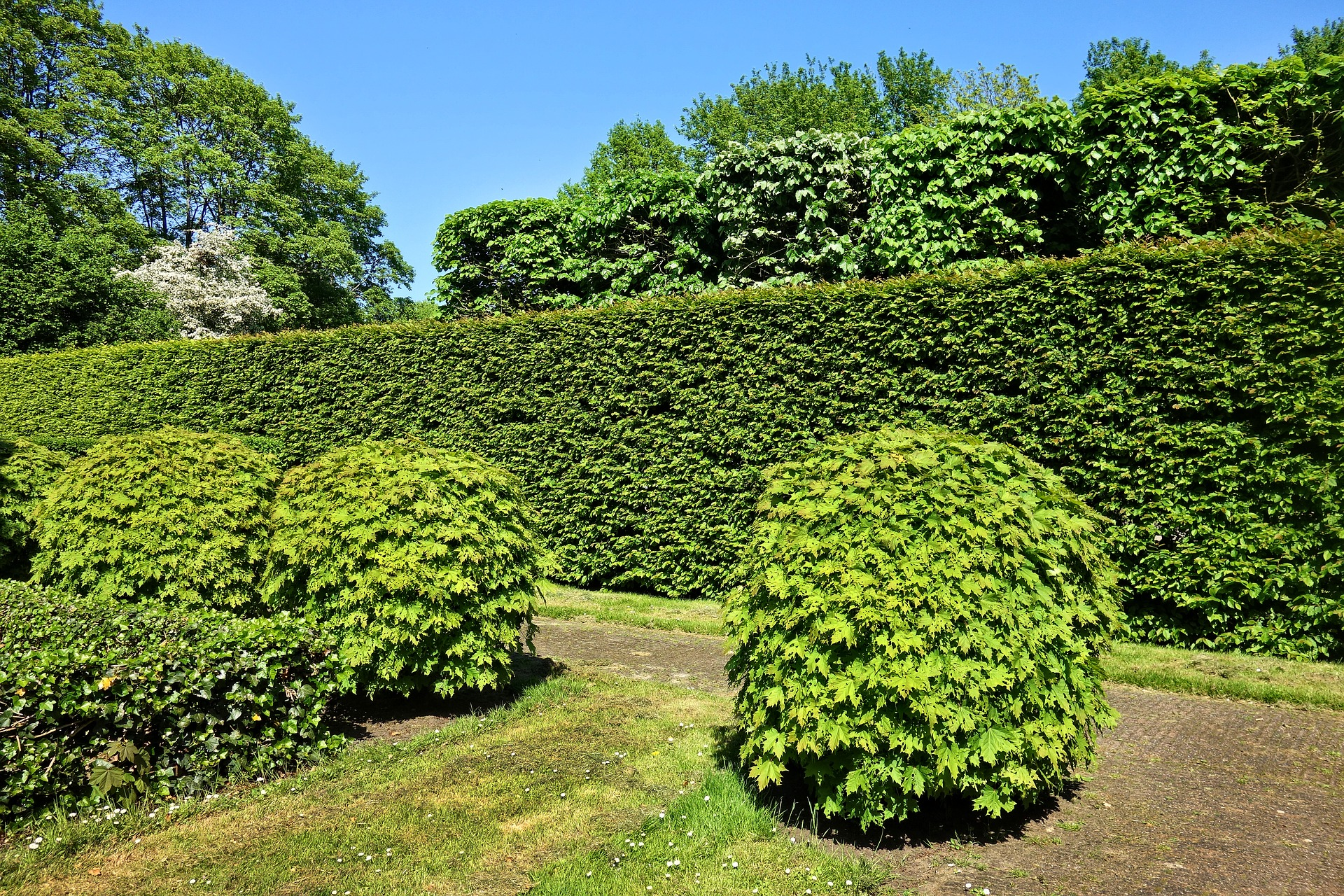 hedge, Natural Privacy Protection With Hedges And Climbing Plants, Best Garden, Home And DIY Tips