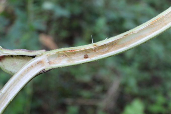 , Leave The Stems Standing – Help Insects!, Best Garden, Home And DIY Tips