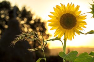 , 12 Simple Everyday Things Anyone Can Do For The Environment, Best Garden, Home And DIY Tips