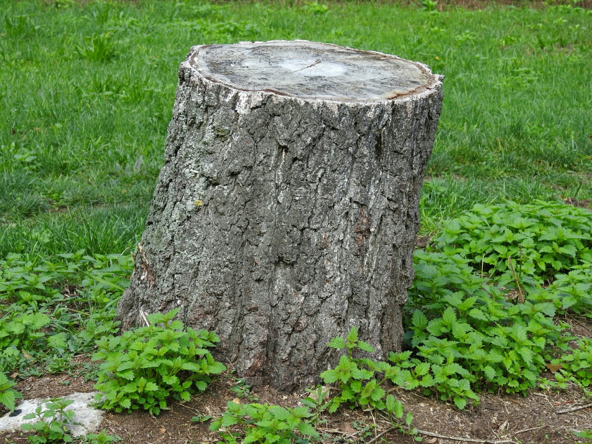 Removing a tree stump – instructions & alternatives such as planting
