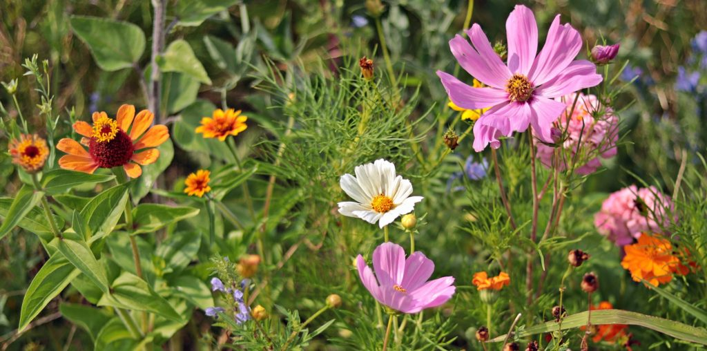 Wild Flowers 3592934 1920 1024x508, Best Garden, Home And DIY Tips