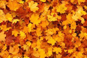 , Foliage in the garden, Best Garden, Home And DIY Tips