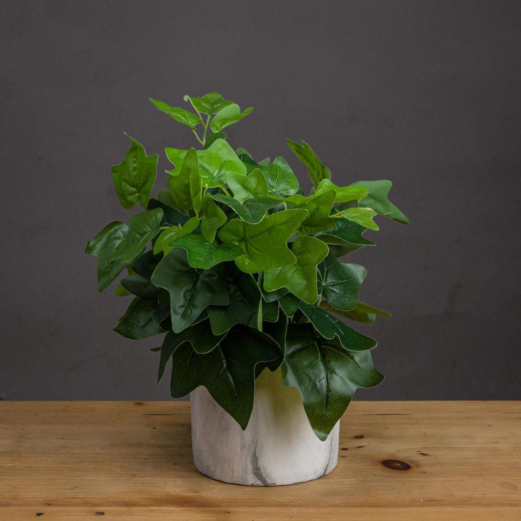 Ivy 1024x1024, Best Garden, Home And DIY Tips