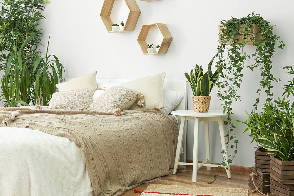 , The Eight Best Plants For The Bedroom, Best Garden, Home And DIY Tips