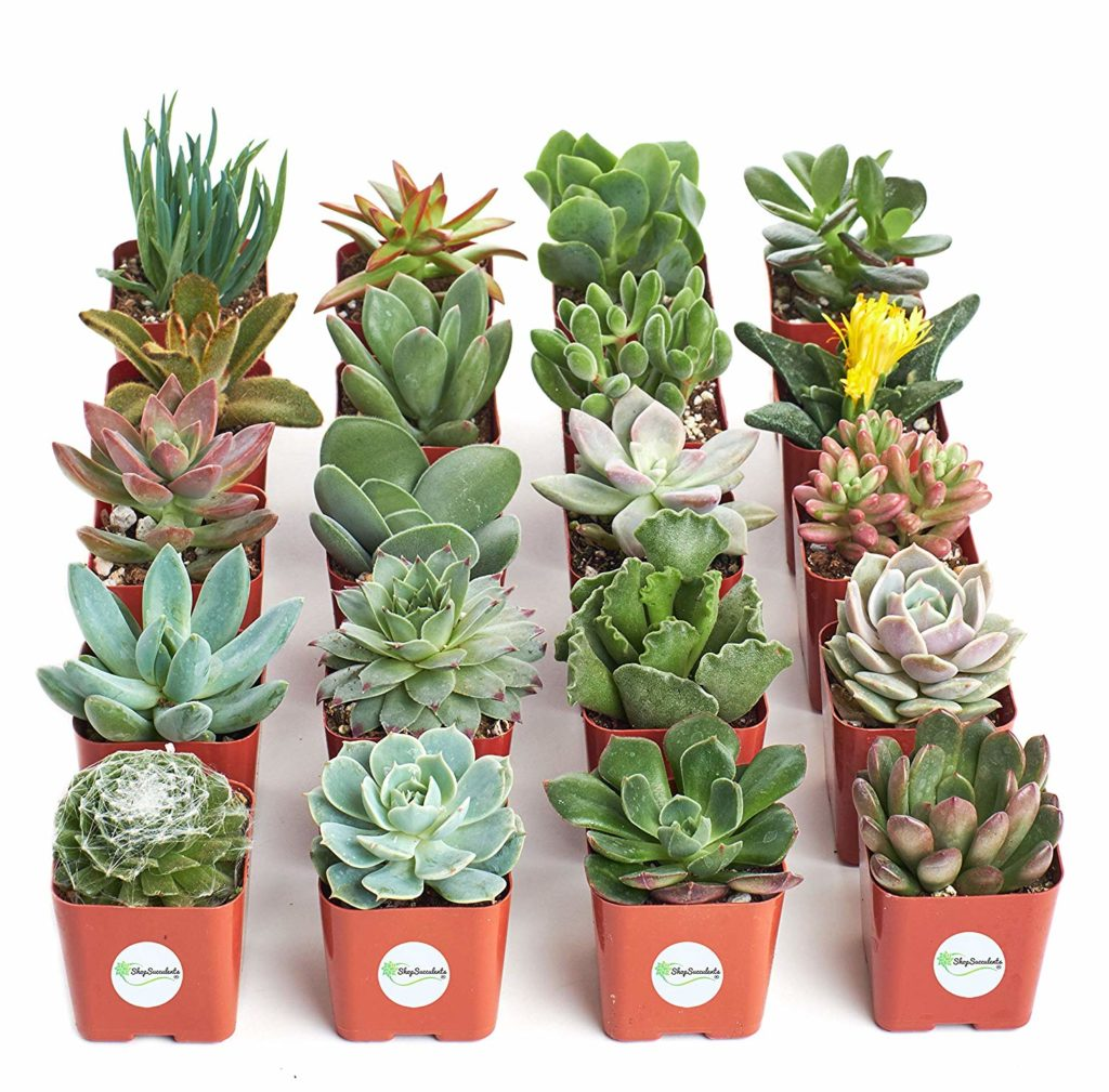 Succulents 1024x1009, Best Garden, Home And DIY Tips