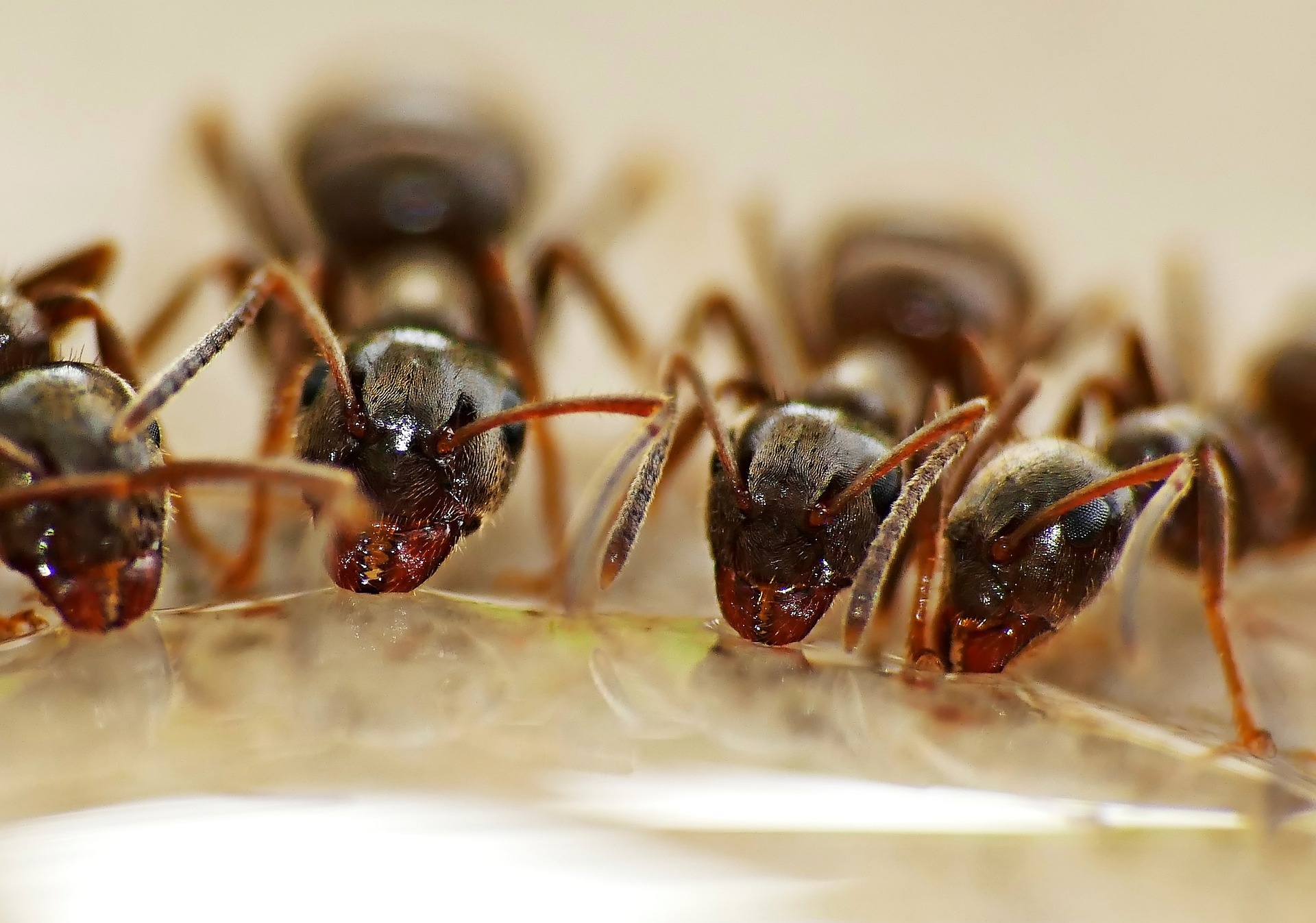 , Fight Ants In The House And Apartment, Best Garden, Home And DIY Tips