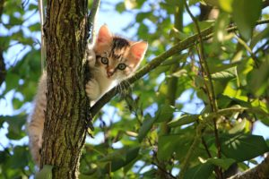 , How To Keep Cats Out Of The Garden, Best Garden, Home And DIY Tips