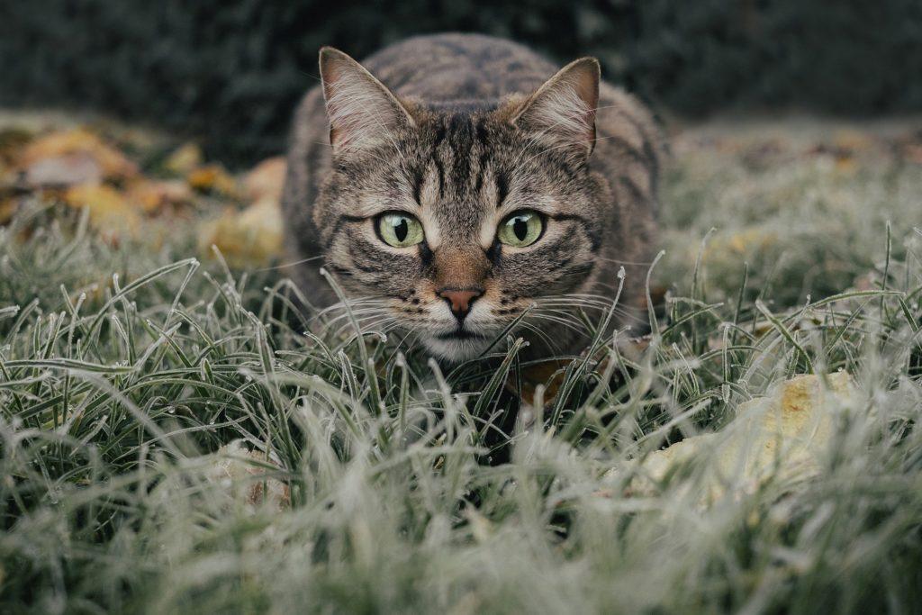 Cat 5778777 1920 1024x683, Best Garden, Home And DIY Tips