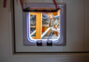 , Install The Cat Flap, Best Garden, Home And DIY Tips