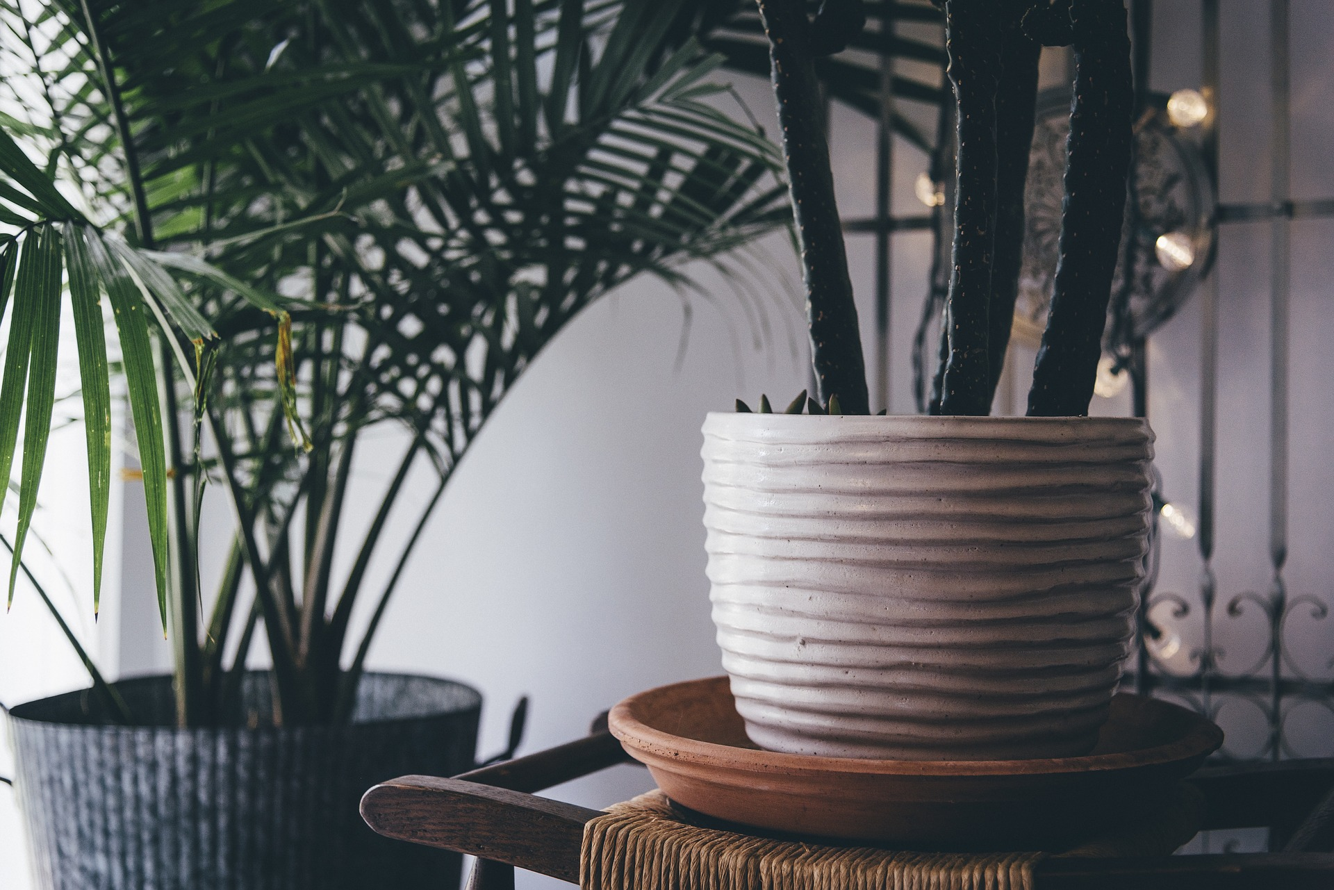 How To Properly Overwinter Indoor Plants