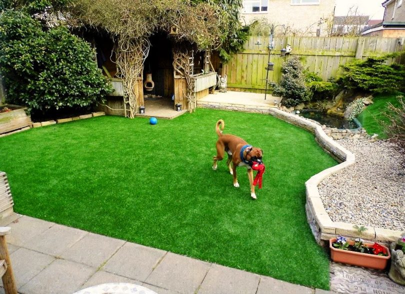Dog Backyard2, Best Garden, Home And DIY Tips