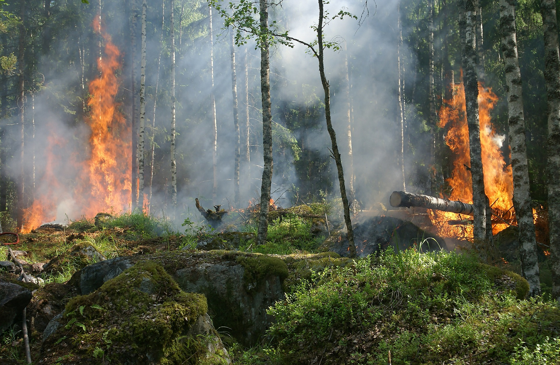 What Fire Does In The Forest