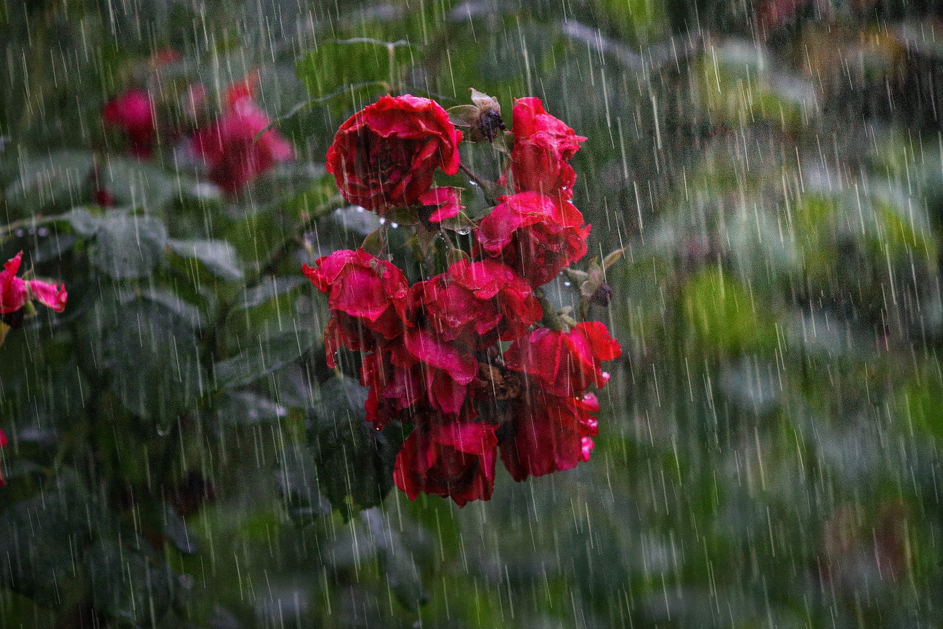 , Heavy Rain And Thunderstorms: How To Protect Your Property, Best Garden, Home And DIY Tips
